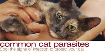 cat parasites guide to coccidia ear mites heartworms