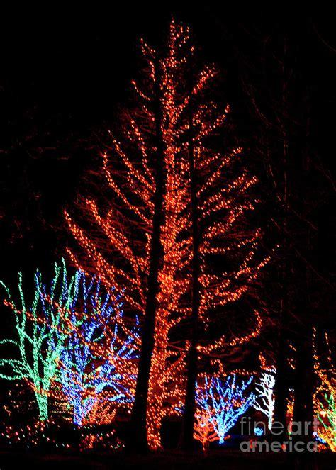 christmas lights 3 photograph by deborah smolinske