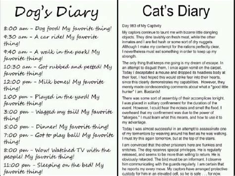 Compare And Contrast Cats And Dogs Essay by Compare And Contrast Essay Cats And Dogs Websitereports991 Web Fc2