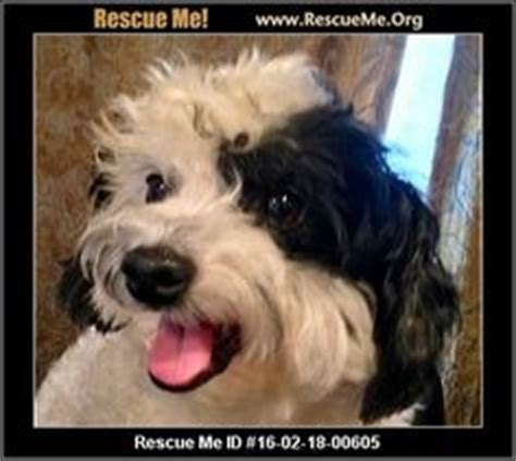 my shih tzu is seizures 1000 images about dogs need to be adopted havanese cotons maltese poodles