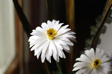 How To Make Paper Daisies - how to make a sweet paper