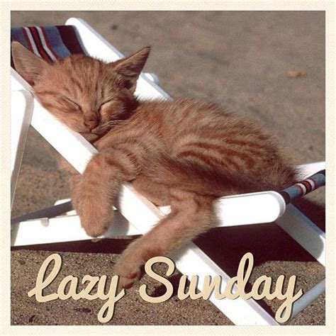 Lazy Day Meme - lazy sunday memes image memes at relatably com