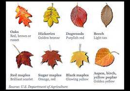 what makes the leaves change color land get the dirt why do leaves change color in