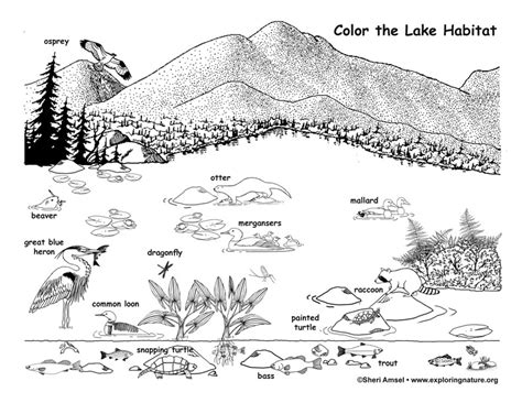 exploring nature coloring pages lake coloring page exploring nature educational resource