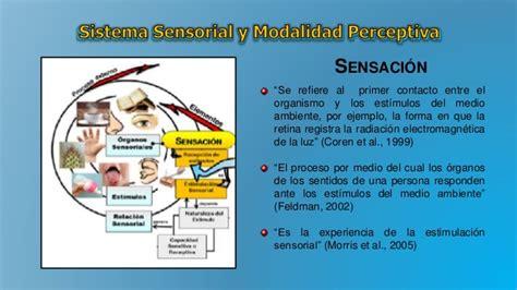 imagenes sensoriales olfativas definicion sistemas sensoriales y modalidades perceptivas