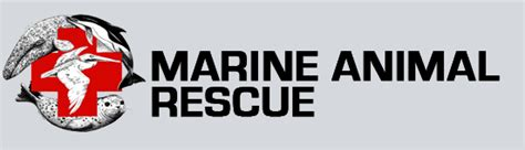 Did you find a wounded sea lion or bird? Contact these wildlife and marine rescue centers
