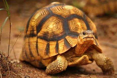 Hipnotis Lovebird By Chan Kicau jenis dan harga kura kura hias binatang peliharaan
