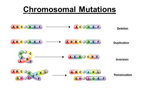 section 12 4 gene regulation and mutation mutations georgia standard ppt download