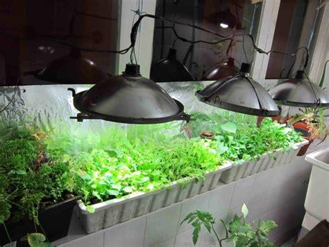 serre de jardin la maison ideale pour vos plantes en hiver