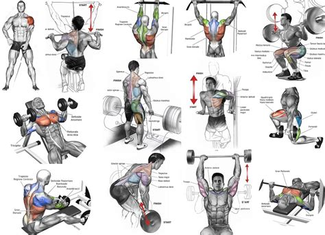 workout plans for men to build muscle at home top muscle building workouts for men all bodybuilding com