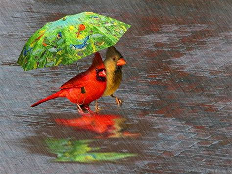 images of love birds in rain rain pictures images graphics for facebook whatsapp