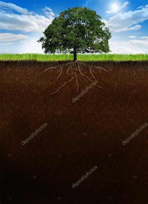 ground section tree with roots on cross section ground stock photo