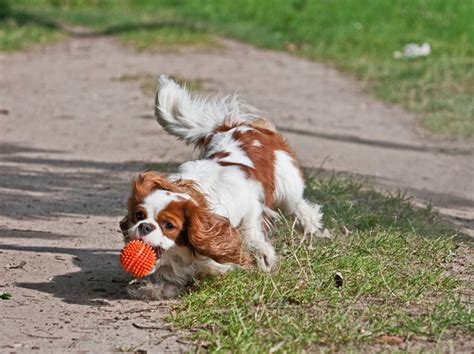 how to to play fetch how to your to play fetch nation