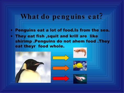 c mis documentos marina col 183 legi engllish penguins