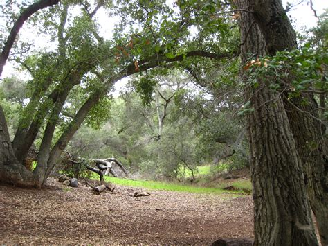 Woodland Tree - uc helps forest owners adapt to climate change green