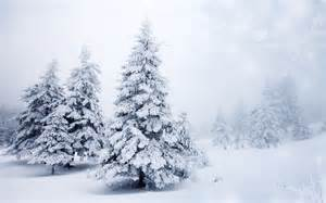 trees spruce winter snow f wallpaper 2560x1600 202143