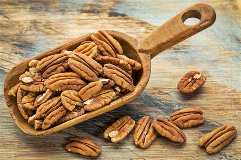 pecans and dogs pecan nut farming a growing phenomenon klk