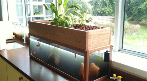 crucial home aquaponics system   diy guide httpvur