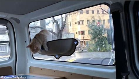cat window seat uk tooty store s cat hammock goes viral daily mail