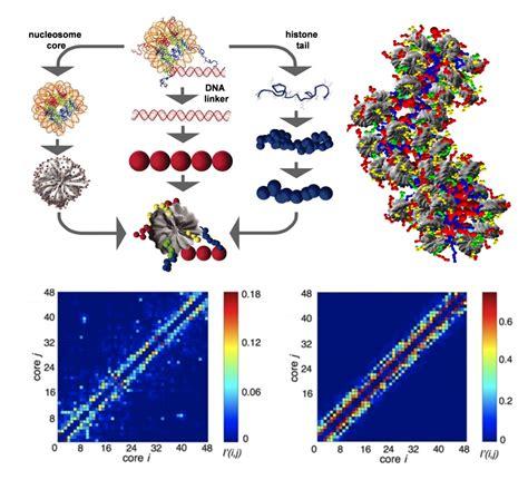 chromatin diagram gaurav arya s homepage