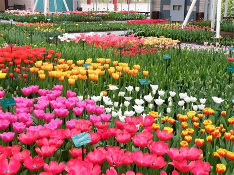 Most Beautiful Flower Gardens In The World Siudy Net Best Flower Garden In The World