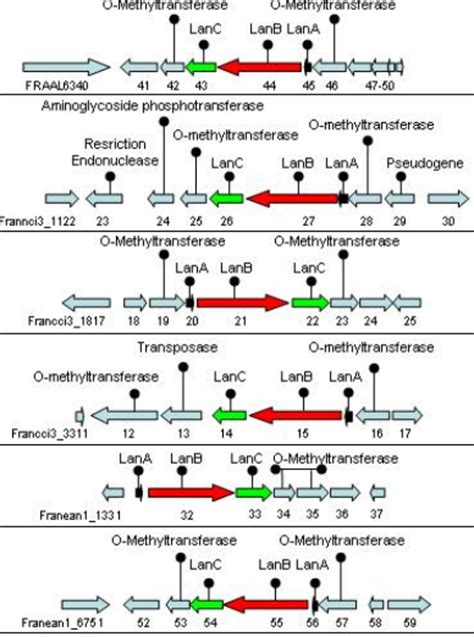 imágenes means in english how to draw annoated gene clusters to size biochemistry