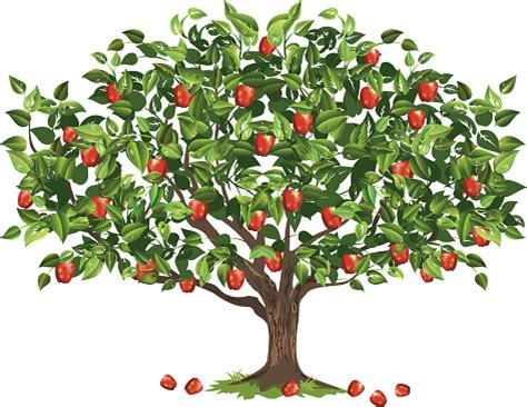 apple tree clipart apple tree clipart clipart collection contributors