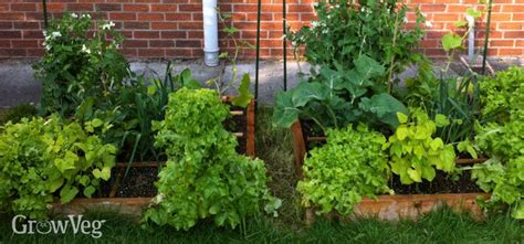 square foot vegetable gardening planning a square foot vegetable garden