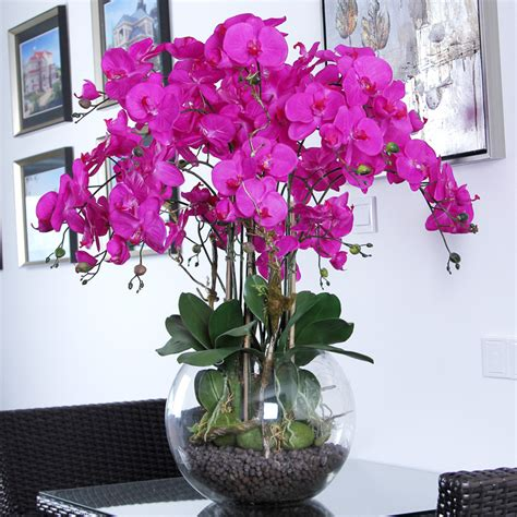 phalaenopsis orchids care how to plant grow grow