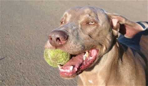 how to teach a to fetch how to teach a to fetch