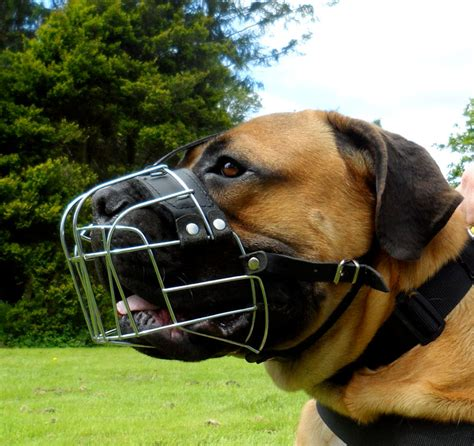 best muzzle muzzles for dogs of all breeds best muzzle uk 163 28 98