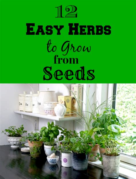 how to grow fresh herbs in your kitchen 12 easy herbs to grow from seeds