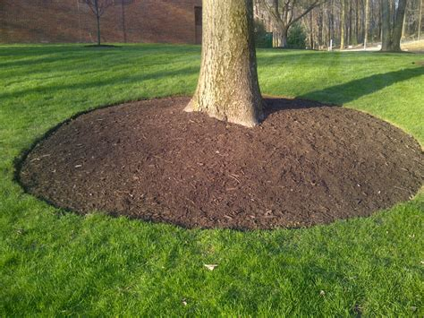 mulching and wood chips the care of trees