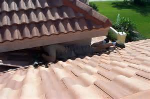 Orlando florida tile roof rodent problems how to keep animals out