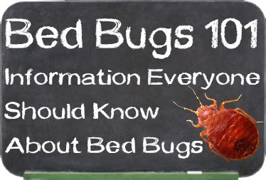 how do people get bed bugs geektick 187 how to prevent bed bugs