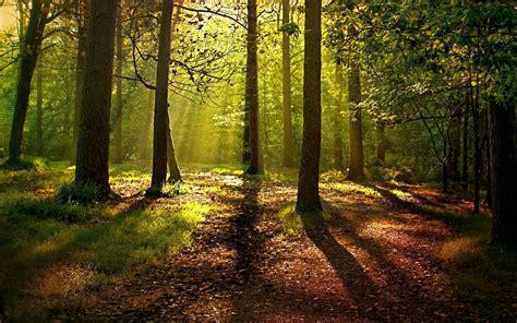 Imagenes Extrañas En El Bosque | un mejor planeta como el que crea este bosque en cdmx toks
