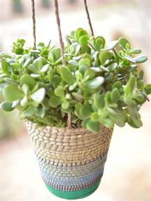 low light hanging plants best outdoor hanging plants for spring hgtv