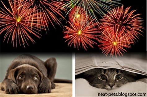 afraid of fireworks is your cat or afraid of fireworks or thunderstorms neat pets dogs cats