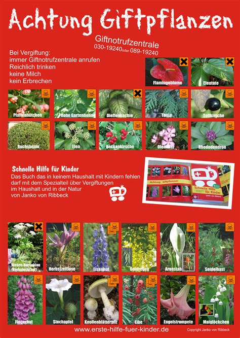 giftige pflanzen f 252 r kinder