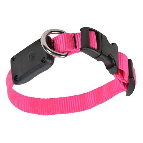 led dog collar light nite ize nite dawg led light up dog collar xs nnd 03 35xs