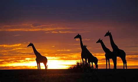safari in kenya with airfare in naivasha groupon getaways
