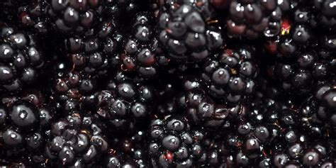 what can i make with blackberries 28 images what can i do with hawthorn berries wild