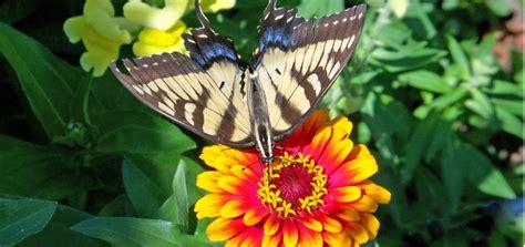 giardino farfalle bed breakfast profumo delle marche le marche