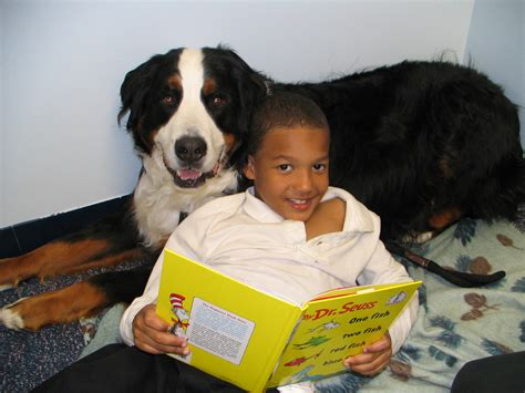 learn to service dogs how service dogs help learn to read rover
