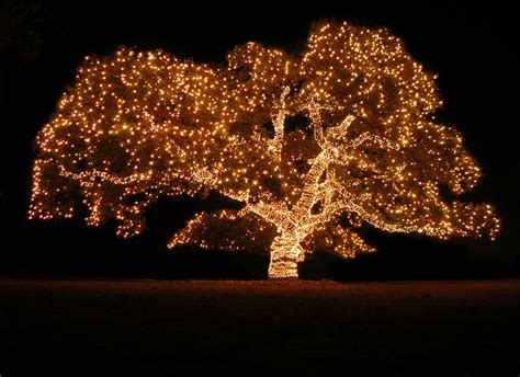 modern outdoor tree lights string 20 outdoor christmas