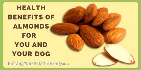 dogs bad for you are almonds bad for dogs archives raising your pets naturally with tonya wilhelm
