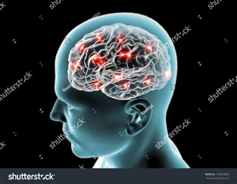 brain test italiano brain neurons synapses reasoning stock illustration