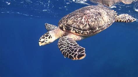 olympus hd olympus tg 4 underwater hd review