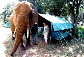 Backyard Discovery Hippo Tent Backyard Discovery Elephant Tent 2017 2018 Best Cars