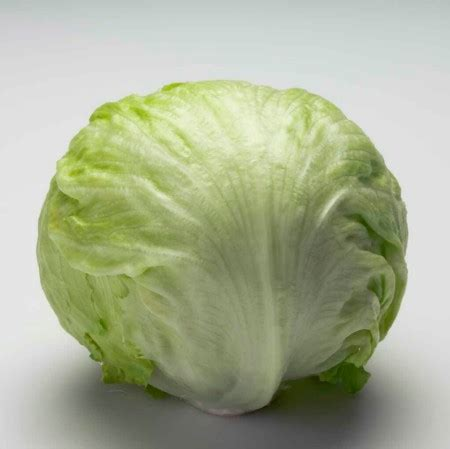 can dogs eat lettuce image gallery lettuce vegetable